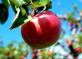 زیبایی های چندگانه پایتخت سیب ایران