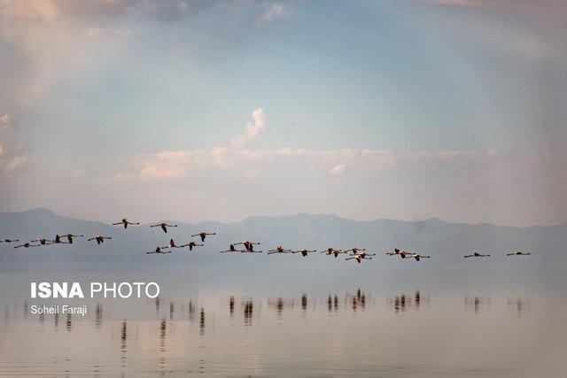 پیش بینی افزایش مهاجرت پرندگان زمستان گذر به تالاب هورالعظیم