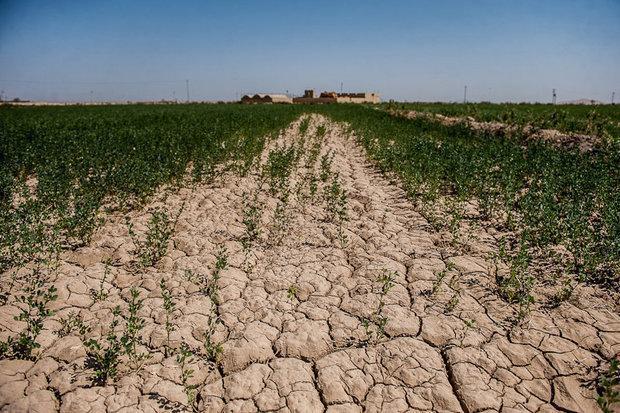 اجرای روش های بی خاک و کم خاک ورزی در 2 میلیون هکتار اراضی زراعی