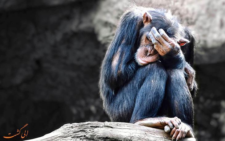 10 جاذبه گردشگری که حیوان آزاری محسوب می شوند!