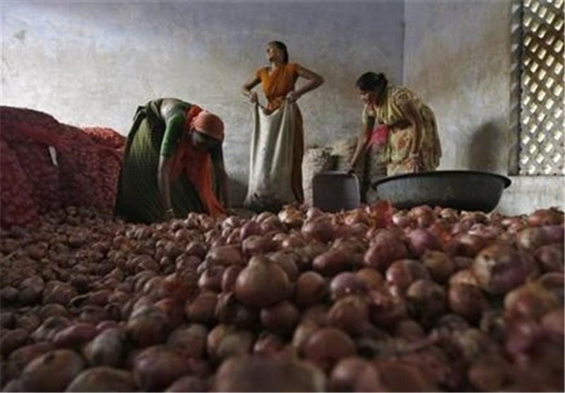 تصمیم هند برای واردات پیاز از ایران، قیمت پیاز در هند 3 برابر شد