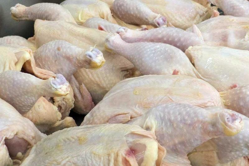 صادرات مرغ و تخم مرغ به کویت آزاد شد