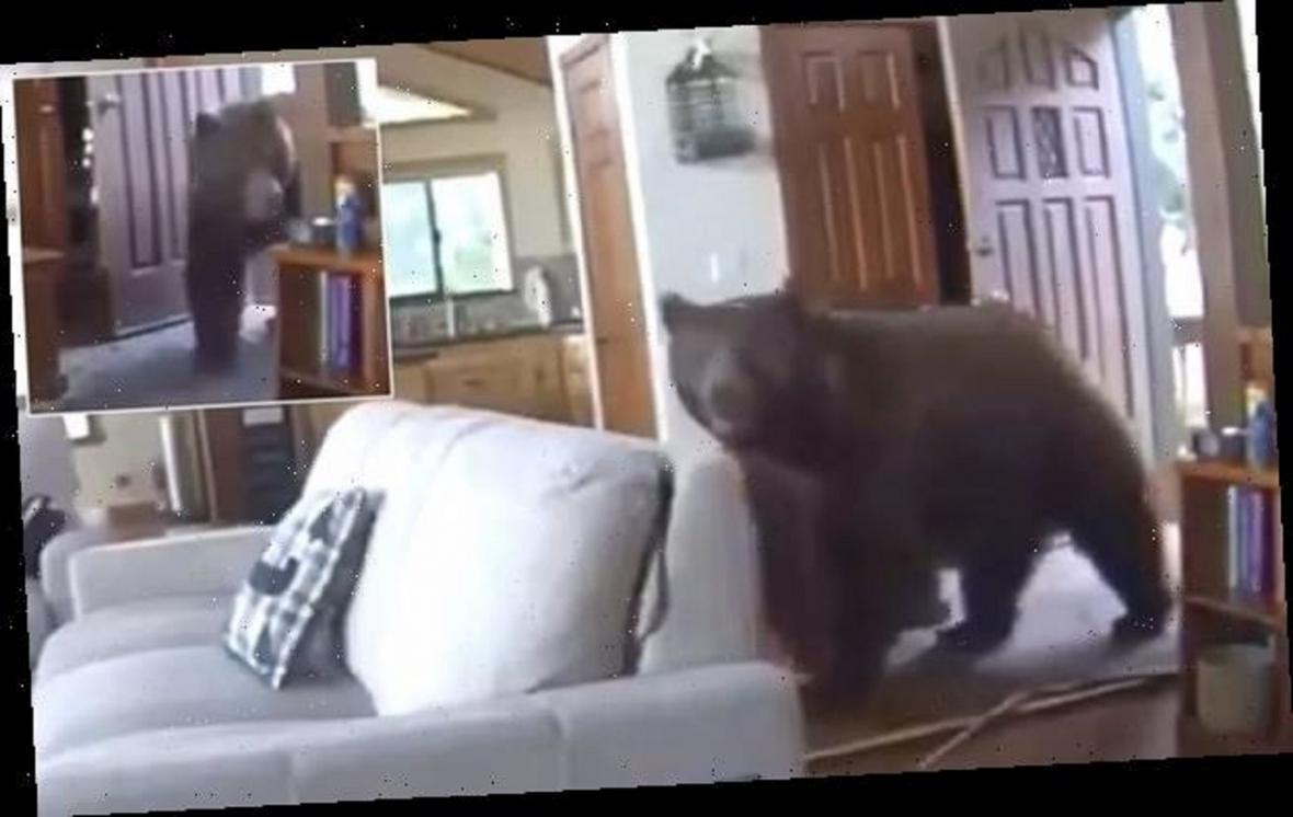 لحظه دلهره آور ورود خرس غول پیکر به داخل خانه!