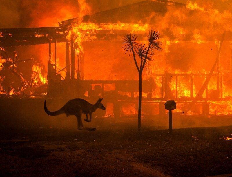 هلاکت سه میلیارد حیوان در آتش سوزی جنگل های استرالیا