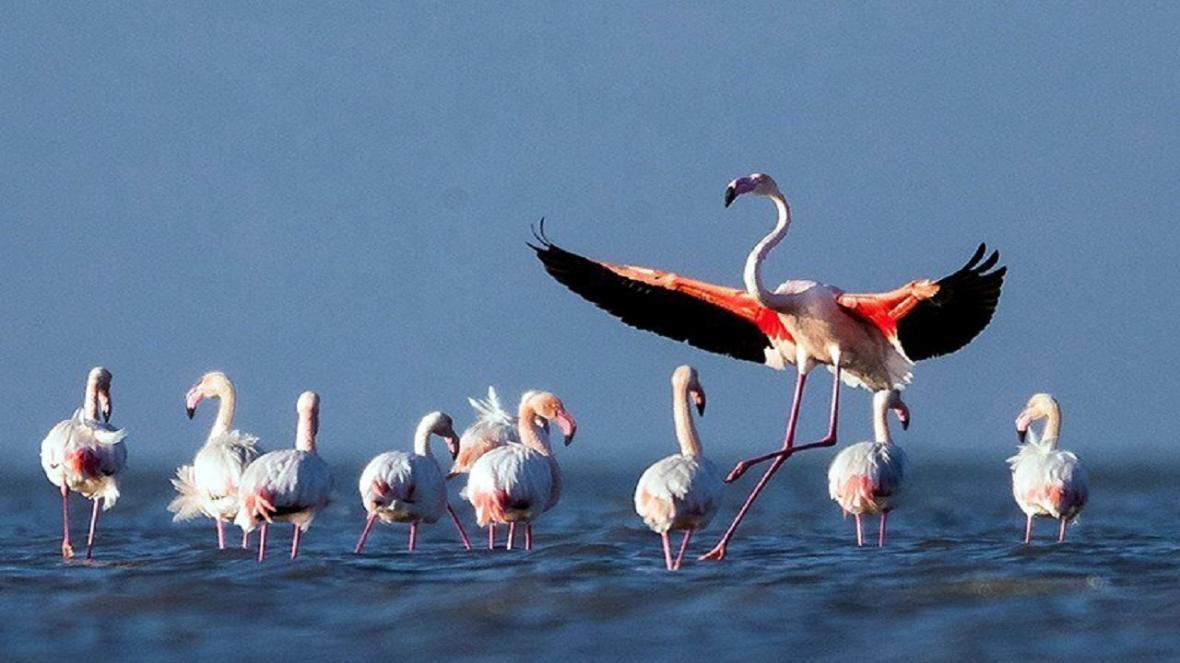 شروع سرشماری پرندگان مهاجر در دی ماه، اردک سرسبز یافت شده در دریاچه چیتگر پرنده مهاجر نیست